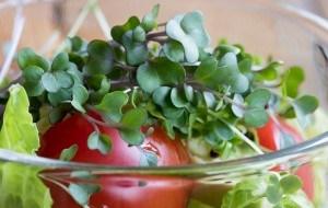 Fresh kale and broccoli microgreens in a vegetable salad